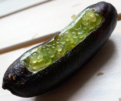 Le citron caviar Limeburst