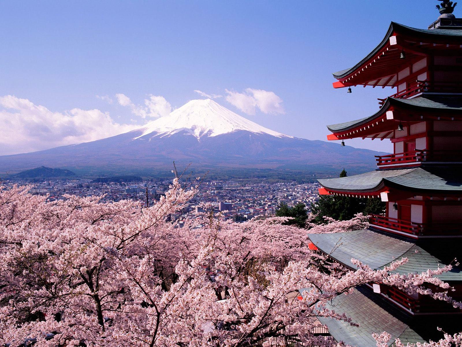 Oranges Et Clementines Toujours Cerisiers En Fleurs Au Japon