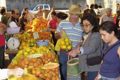 foire aux agrumes , oranges, clémentines, citrons non traités