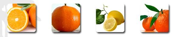 agrumes espagne oranges clémentines citrons