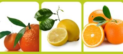 agrumes non traités espagne oranges clémentines citrons