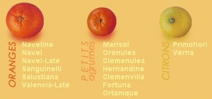 oranges et cl mentines toujours les agrumes toujours. Black Bedroom Furniture Sets. Home Design Ideas