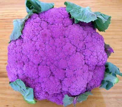 Choux fleurs violets