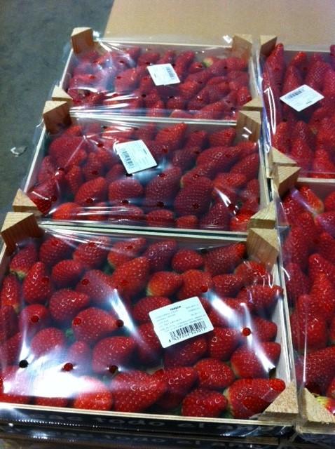 fraises espagne 2